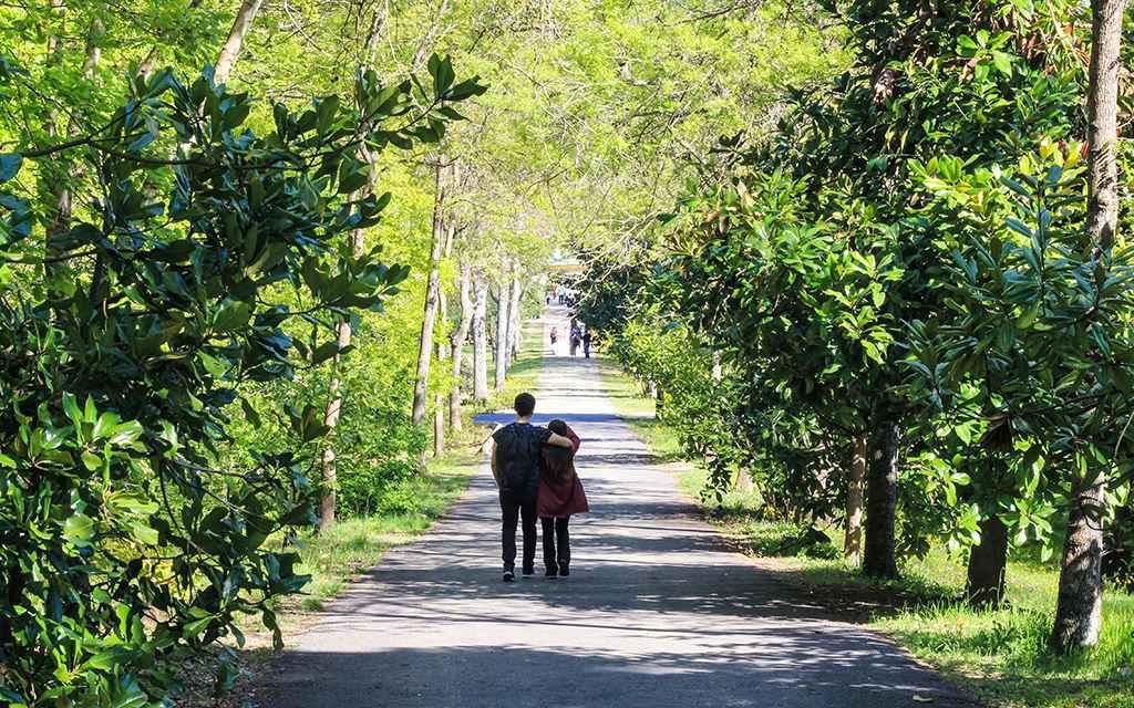 İstanbul'un Huzur Veren Gizli Bahçesi: Atatürk Arboretumu